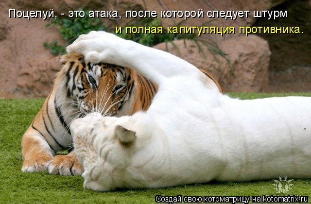 Котоматрица: Поцелуй, - это атака, после которой следует штурм  и полная капитуляция противника.