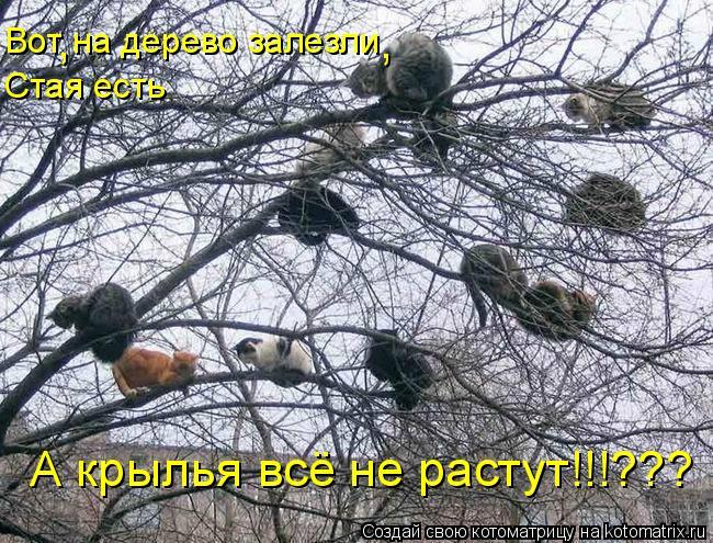 Котоматрица: Вот на дерево залезли Стая есть А крылья всё не растут!!!??? , ,
