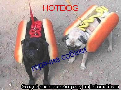 Котоматрица: HOTDOG горячие собаки