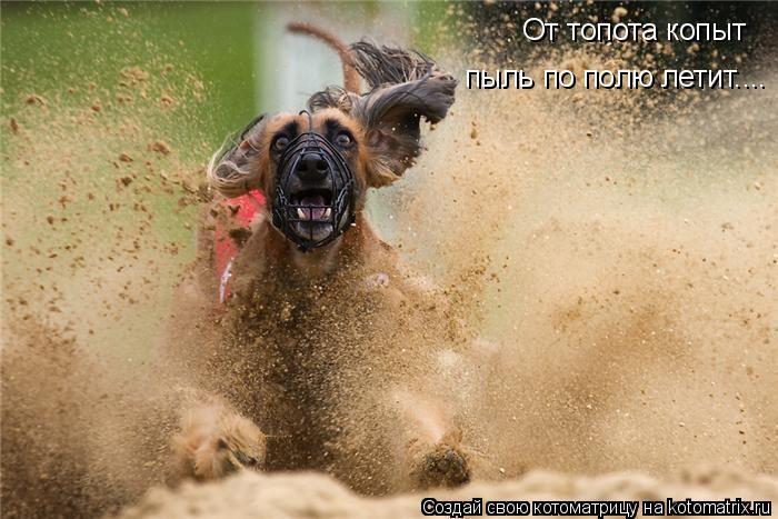 Котоматрица: От топота копыт пыль по полю летит....