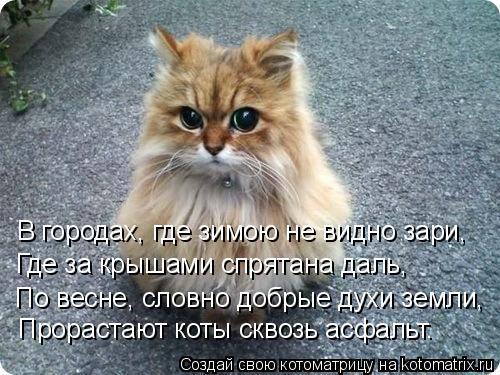 Котоматрица: В городах, где зимою не видно зари, Где за крышами спрятана даль, По весне, словно добрые духи земли, Прорастают коты сквозь асфальт.