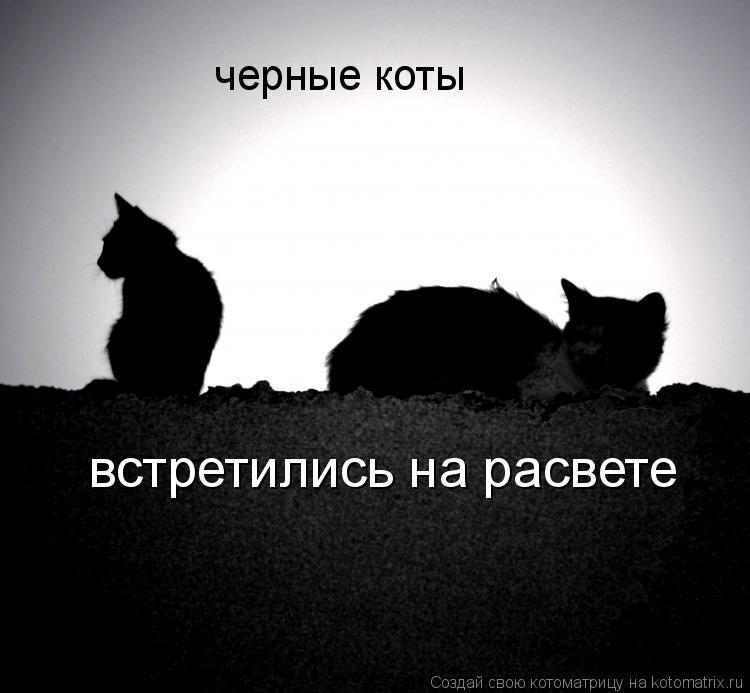 Котоматрица: черные коты встретились на расвете