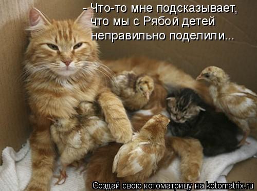 Котоматрица: - Что-то мне подсказывает, что мы с Рябой детей  неправильно поделили...