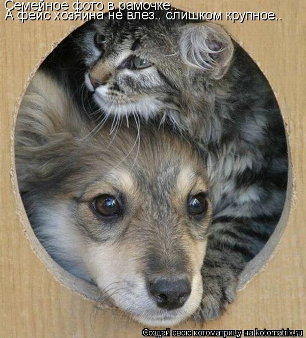 Котоматрица: Семейное фото в рамочке.. А фейс хозяина не влез.. слишком крупное..