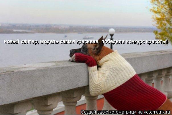 Котоматрица: новый свитер, модель самая красивая, победила конкурс красоты!