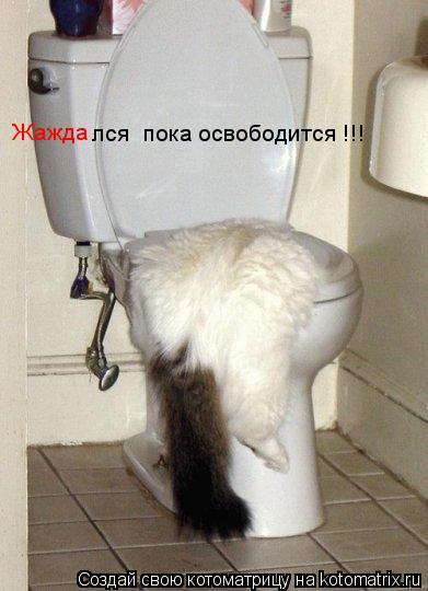 Котоматрица: Жажда лся  пока освободится !!!