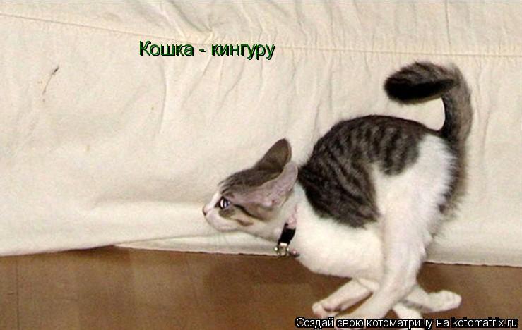 Котоматрица: Кошка - кингуру