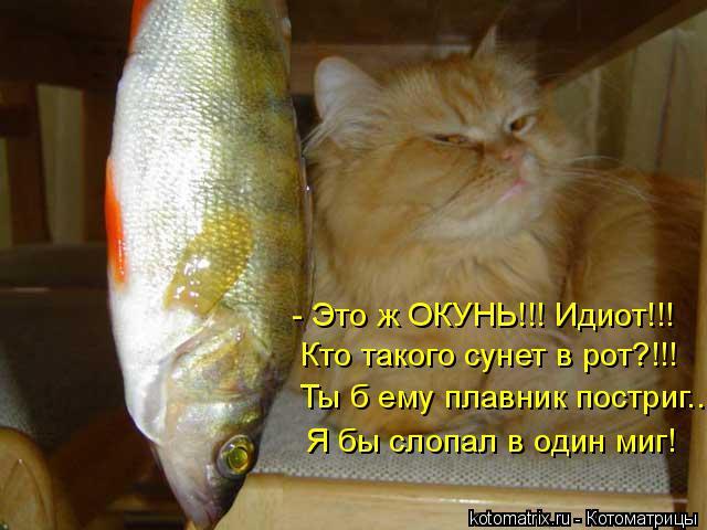 Котоматрица: - Это ж ОКУНЬ!!! Идиот!!! Кто такого сунет в рот?!!! Ты б ему плавник постриг... Я бы слопал в один миг!