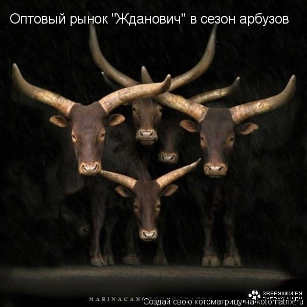 """Котоматрица: Оптовый рынок """"Жданович"""" в сезон арбузов"""