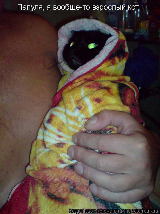 Котоматрица: Папуля, я вообще-то взрослый кот