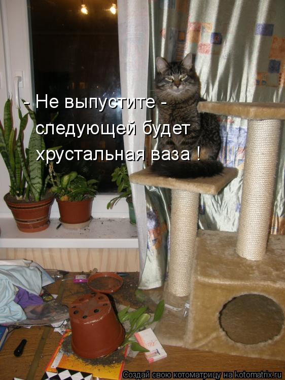 Котоматрица: - Не выпустите -  следующей будет  хрустальная ваза !