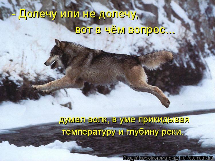 Котоматрица: вот в чём вопрос... - Долечу или не долечу,  думал волк, в уме прикидывая  температуру и глубину реки.
