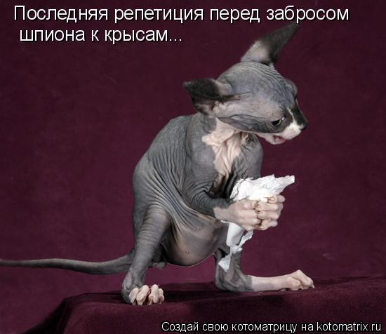 Котоматрица: Последняя репетиция перед забросом  шпиона к крысам...