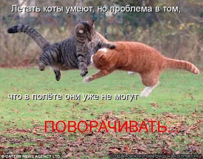 Котоматрица: Летать коты умеют, но проблема в том,  что в полёте они уже не могут ПОВОРАЧИВАТЬ...