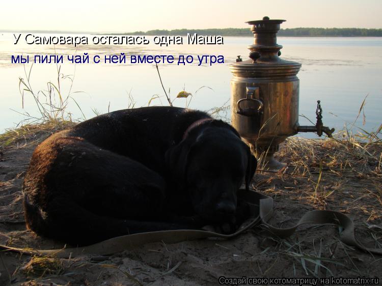 Котоматрица: У Самовара осталась одна Маша  У Самовара осталась одна Маша   мы пили чай с ней вместе до утра  мы пили чай с ней вместе до утра
