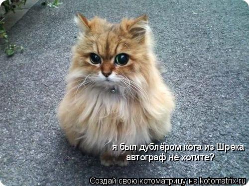 Котоматрица: я был дублёром кота из Шрека автограф не хотите?