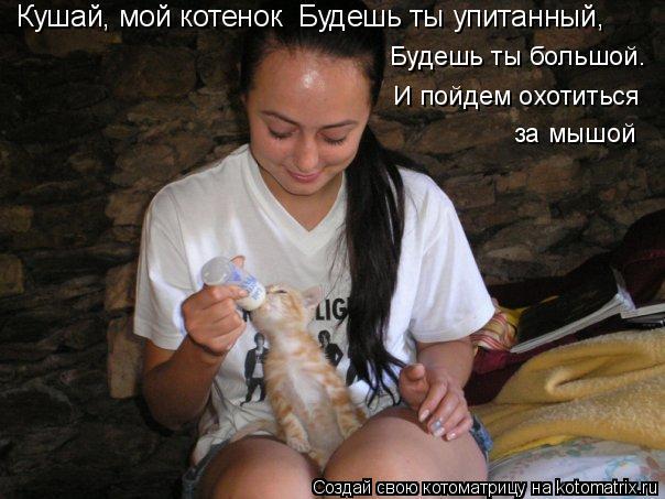Котоматрица: Кушай, мой котенок  Будешь ты упитанный, Будешь ты большой. И пойдем охотиться за мышой