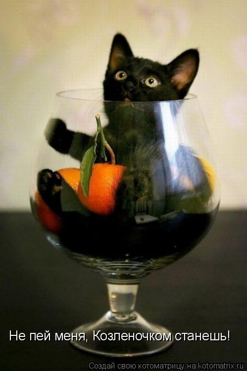 Котоматрица: Не пей меня, Козленочком станешь!