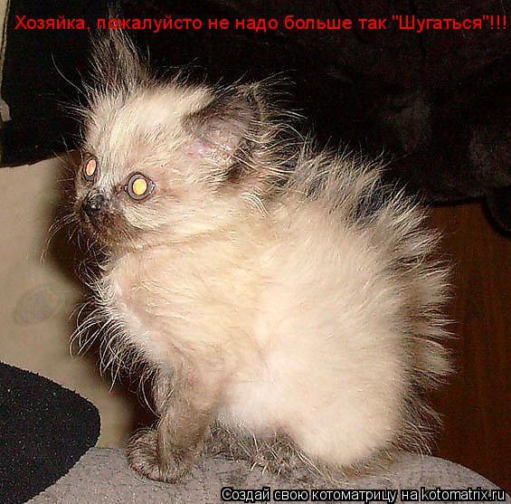 """Котоматрица: Хозяйка, пожалуйсто не надо больше так """"Шугаться""""!!!"""