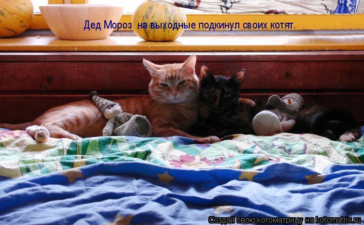 Котоматрица: Дед Мороз  на выходные подкинул своих котят.