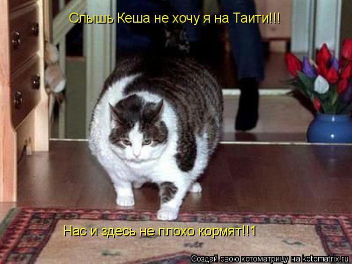 Котоматрица: Слышь Кеша не хочу я на Таити!!!   Нас и здесь не плохо кормят!!1