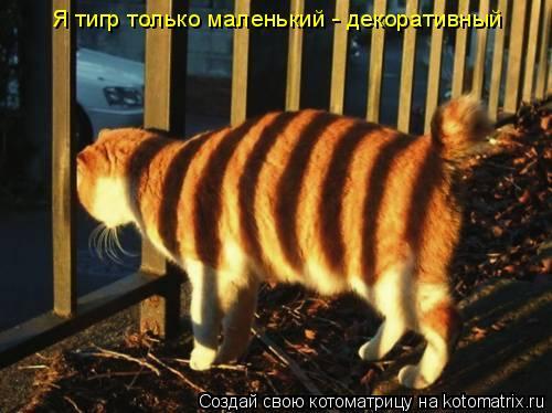 Котоматрица: Я тигр только маленький - декоративный