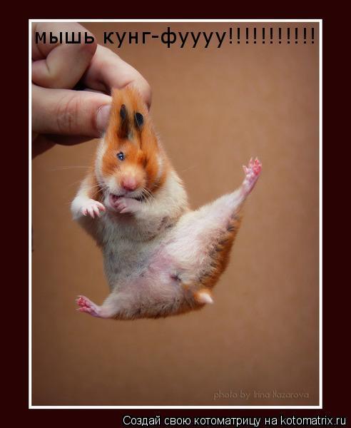 Котоматрица: мышь кунг-фуууу!!!!!!!!!!!