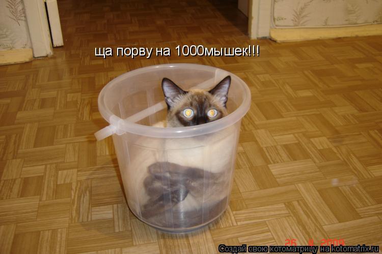 Котоматрица: ща порву на 1000мышек!!!