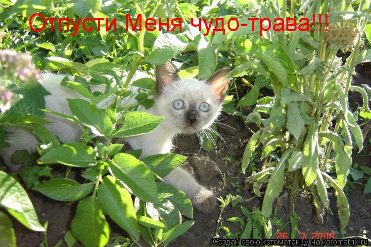 Котоматрица: Отпусти Меня чудо-трава!!!