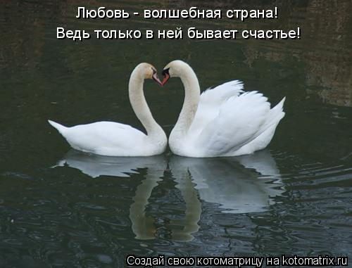 Котоматрица: Любовь - волшебная страна! Ведь только в ней бывает счастье!