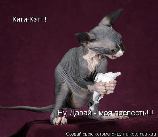 Котоматрица: Кити-Кэт!!!   Ну, Давай - моя прелесть!!!
