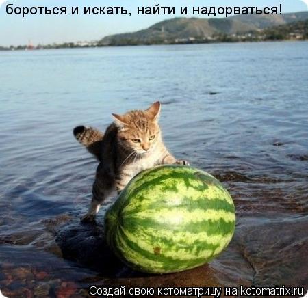 Котоматрица: бороться и искать, найти и надорваться!