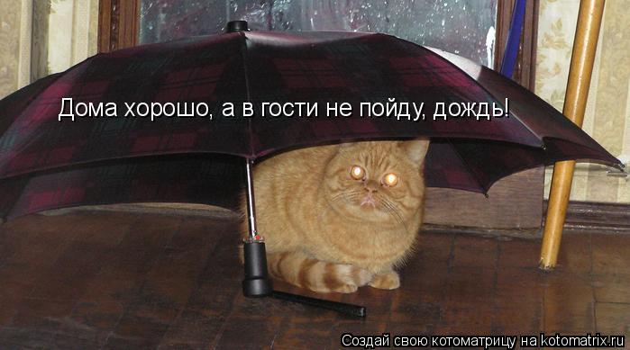 Котоматрица: Дома хорошо, а в гости не пойду, дождь!