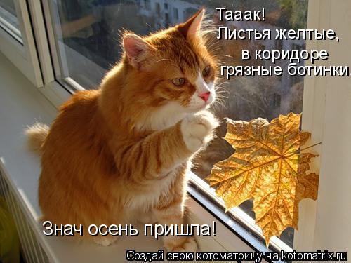 Котоматрица: Тааак!  Листья желтые, в коридоре  грязные ботинки...  Знач осень пришла!