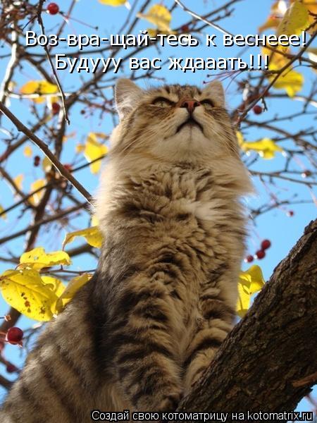 Котоматрица: Воз-вра-щай-тесь к веснеее! Будууу вас ждааать!!!