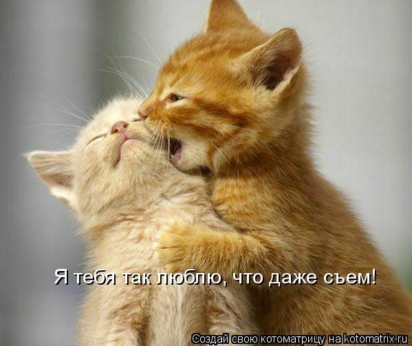 Котоматрица: Я тебя так люблю, что даже съем!