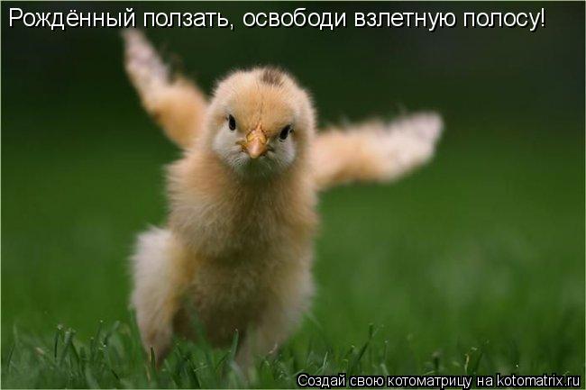 Котоматрица: Рождённый ползать, освободи взлетную полосу!