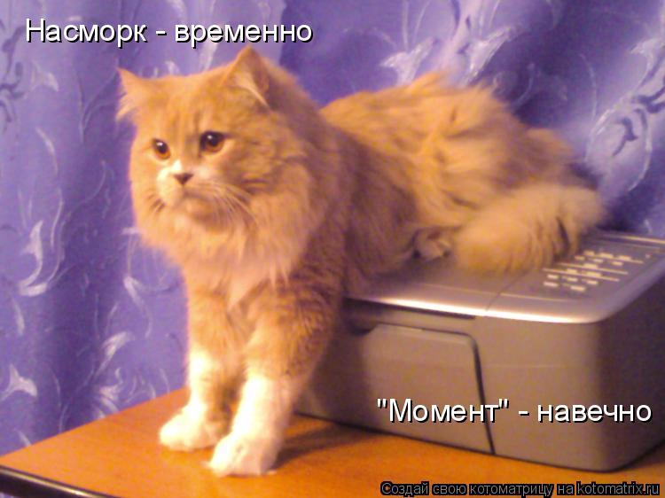 "Котоматрица: Насморк - временно ""Момент"" - навечно"