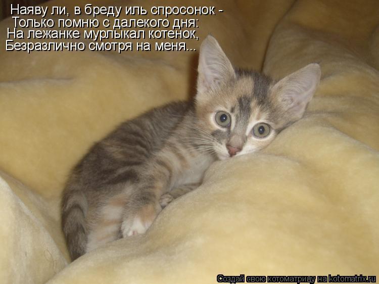 Котоматрица: Наяву ли, в бреду иль спросонок - Только помню с далекого дня: На лежанке мурлыкал котенок, Безразлично смотря на меня...