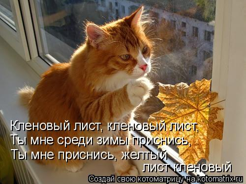 Котоматрица: Кленовый лист, кленовый лист, Ты мне среди зимы приснись, Ты мне приснись, желтый  лист кленовый