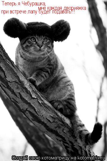 Котоматрица: Теперь я Чебурашка, мне каждая дворняжка при встрече лапу будет подавать!!!