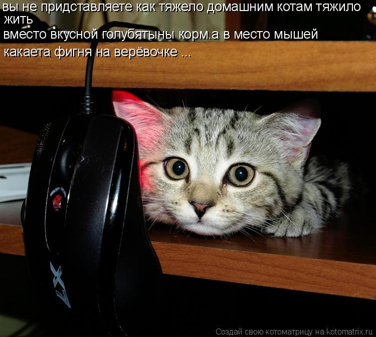 Котоматрица: вы не придставляете как тяжело домашним котам тяжило жить вместо вкусной голубятыны корм.а в место мышей  какаета фигня на верёвочке ...