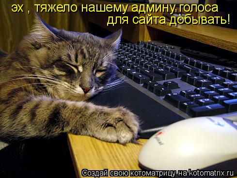 Котоматрица: эх , тяжело нашему админу голоса для сайта добывать! ,