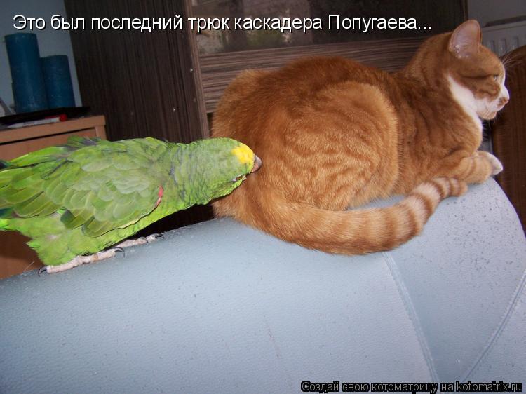 Котоматрица: Это был последний трюк каскадера Попугаева...
