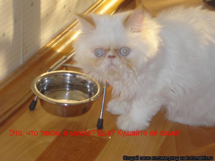 Котоматрица: Это, что такое, в миске? Еда? Кушайте её сами!