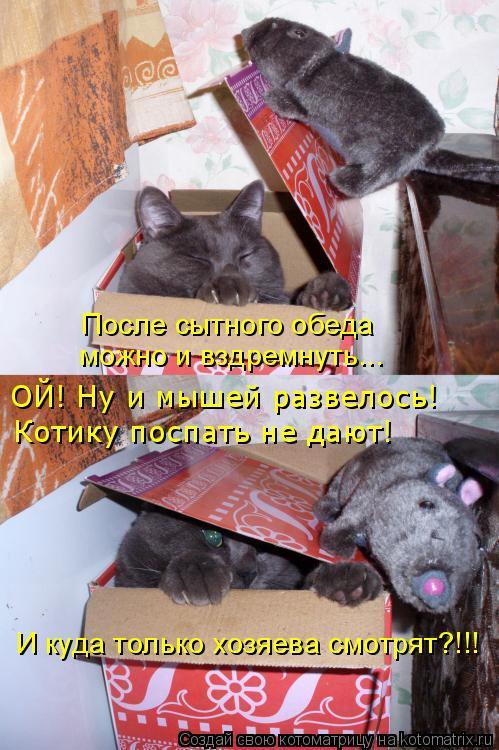 Котоматрица: После сытного обеда можно и вздремнуть... ОЙ! Ну и мышей развелось! Котику поспать не дают! И куда только хозяева смотрят?!!!