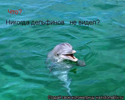 Котоматрица: Что? Никогда дельфинов не видел?