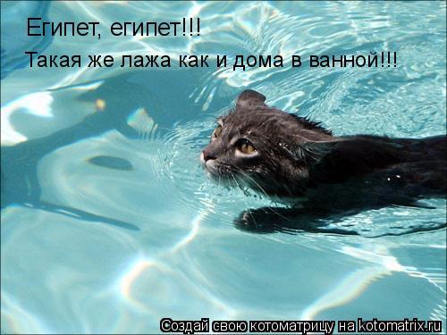 Котоматрица: Египет, египет!!! Такая же лажа как и дома в ванной!!!