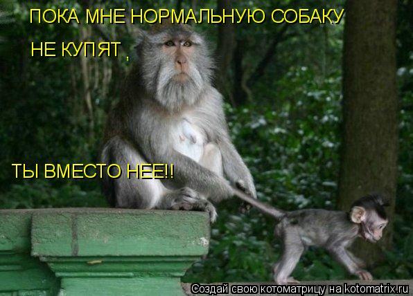 Котоматрица: ПОКА МНЕ НОРМАЛЬНУЮ СОБАКУ НЕ КУПЯТ , ТЫ ВМЕСТО НЕЕ!!