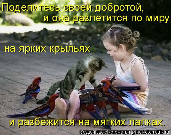 Котоматрица: Поделитесь своей добротой, и она разлетится по миру  на ярких крыльях и разбежится на мягких лапках.